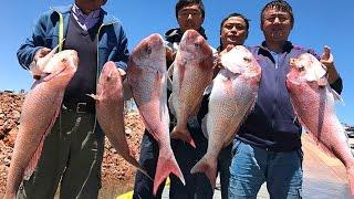 【澳洲生活】阿德雷德钓大鲷鱼88cm+ Fishing Big snapper in adelaide