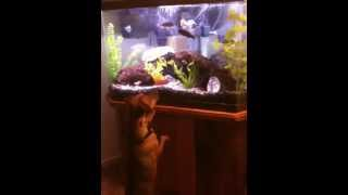 Jax (min. Pin/jack Russell Terrier Mix) & The New Fish Tank..