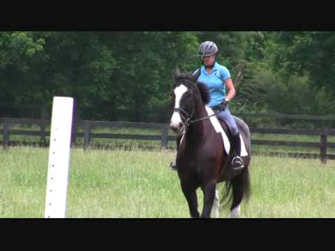 Horses Percheron/TB Cross, Second Jumping Training Lesson (Cookie Bros)