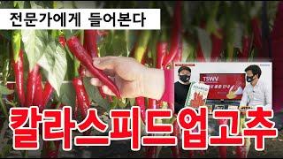 [전문가 강좌] 조기에 수확하려면 칼라스피드업 고추 심…