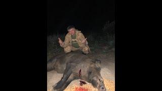 Охота на медведя и кабана на овсах! Медвежья Гора!