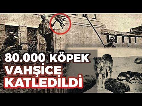 İstanbul'da 80 Bin Köpeğin Katledildiği An