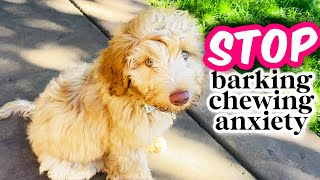 HOW TO: Train Your Puppy to be ALONE  Avoiding 3 COMMON Mistakes!
