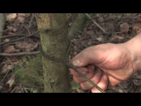 Bushcraft: How To Tie A Taut Tarp Hitch