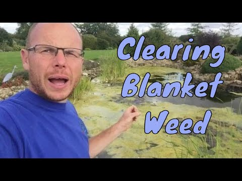 What To Do With A Blanket Weed Covered Pond? Info About Bio Lake