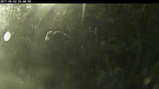 Osprey NestCAM