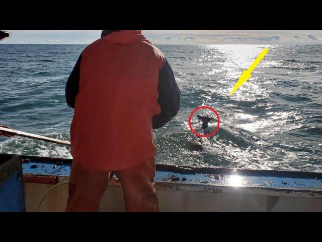 В 8-ми км. от берега рыбаки заметили странное существо. Приблизившись к нему они не поверили...