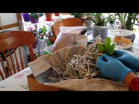 Unboxing: More Orchids To Love, From Tropical Orchids Farm...
