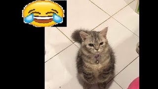 ¡¡FUNNY ANIMALS COMPILATION!/TRY NOT TOLAUGH WITH THIS! (level god)