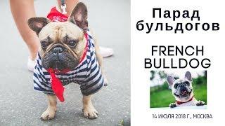 Смотреть видео Парад французских бульдогов на Дне Франции в Москве 14 июля 2018 года на