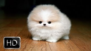 Fluffy Puppies Are Very Happy