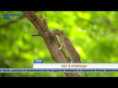 Полчища крыс одолевают жителей Кировского района Перми