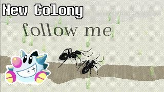 New Colony | Experimental Ant game by Sokpop!