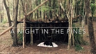 A night in the pines