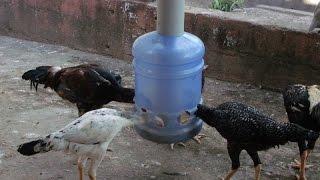 Comedouro Caseiro para frangos e galinhas