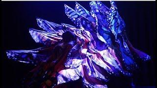 ✾ Ƹ̵̡Ӝ̵̨̄Ʒ butterflys bellydance Ƹ̵̡Ӝ̵̨̄Ʒ ✾