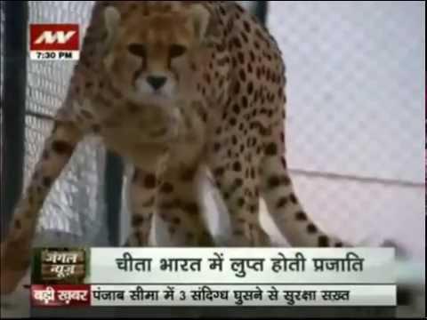 Jungle News: A splendid walk with