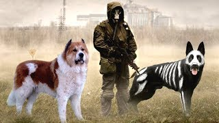 These Are 10 Best Dogs to Survive an Apocalypse