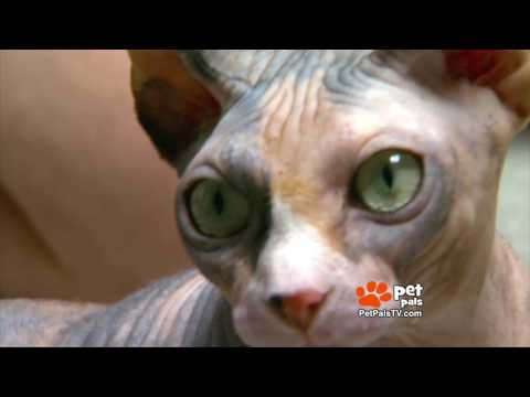 What Makes the Sphynx Cat So Special