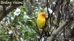 Snowy morning at Mary Jo's - Birds of Ash Canyon Arizona