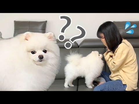 [ENG]주인이 서럽게 울때 강아지 반응(심쿵😢) | Cute Dog Reaction to me Crying | HongSnow 홍설