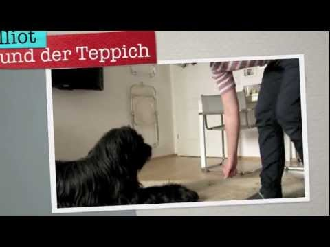 Amazing household dog tricks by Elliot the Briard trickdog