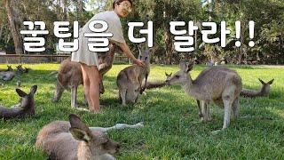 (여행영상)호주신혼여행 중 골드코스트 꼭 와야함 추천 …