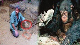 La Sorprendente Historia de los Chimpancés que llegaron a la edad de Piedra