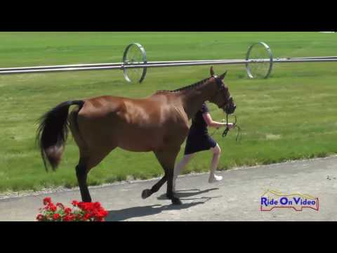 709J1 Laine Metz On Queen Of Spades NAJYRC CCI1* FEI Jog 1 Rebecca Farm July 2017