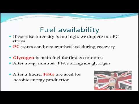 A2 PE Ex Phys Factors Affecting the Energy System Used