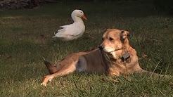 hqdefault - Dog Depression After Heat