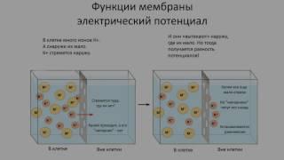 4. Нервная система клеточное строение (8 класс) биология, подготовка к ЕГЭ и ОГЭ