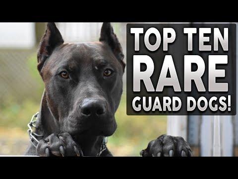 Top 10 RARE Guard Dog Breeds!