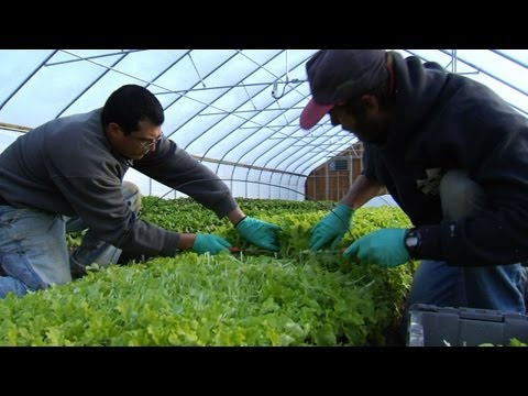 University of New Hampshire Greenhouse Project