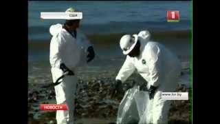 Нефтяные пятна у побережья Калифорнии растянулись на 15 километров!