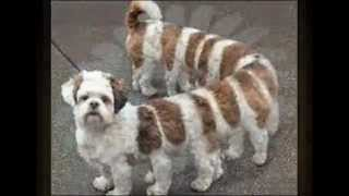 Mój pokaz slajdów-Śmieszne Zwierzęta