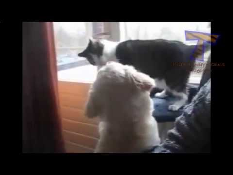Cats slapping and punching dogs Funny video