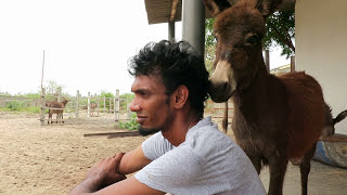 Kelvin with the donkey Musaeus _Mannar