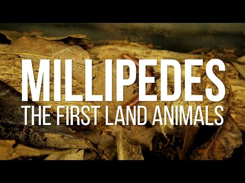 Millipedes: The First Land Animals