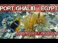 Clownfishes & Snorkeling at Port Ghalib Resort - Marsa Alam- Egypt 2018