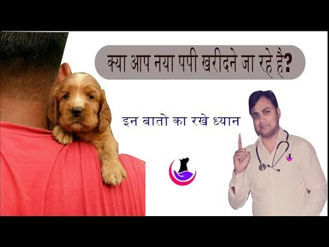 Are you planning to buy new puppy? Remember these points before purchase (in hindi)