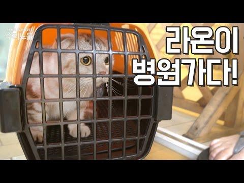 고양이 라온이 병원가다!Cat Raon went to Animal Hospital【수리노을 SURI&NOEL】