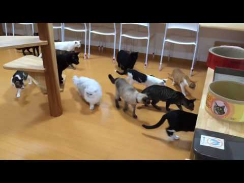 Cats scared by cleaning robot