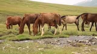 Природа Киргизии, Иссык Куль, Джайло, Горная рыбалка, www.zosva.ru