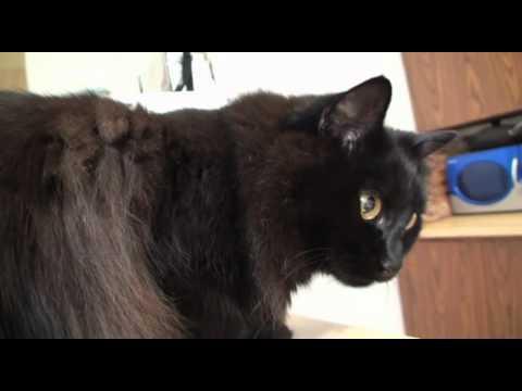 Thumbnail for Cat Video Cat vs. Pen