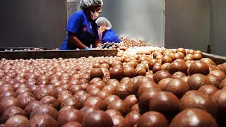 World Most Expensive Nuts - Macadamia Cultivation Technology - Macadamia Nuts Harvest And Process