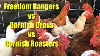 Freedom Rangers vs Cornish Cross vs Cornish Roasters