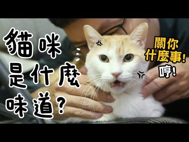 黃阿瑪的後宮生活-試聞-貓咪是什麼味道