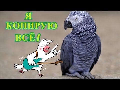 Самый Лучший Говорящий Попугай ЖАКО\РОМА КОПИРУЕТ ВСЁ! - 2 сезон,14 серия