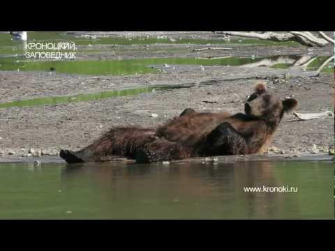 видео: МЕДВЕДЬ И ЛОСОСЬ. Bear and Salmon. Happy Bear.